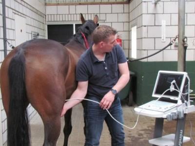 Overzicht van mijn dienstenpaardendokter majoor for Paard aan huis te koop